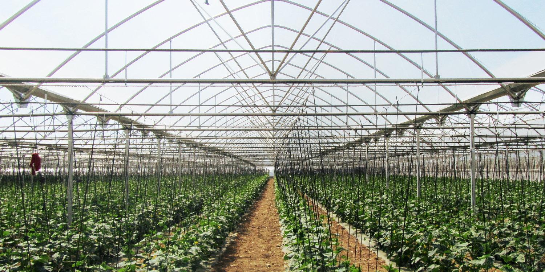 Invernaderos y centros de jardinería