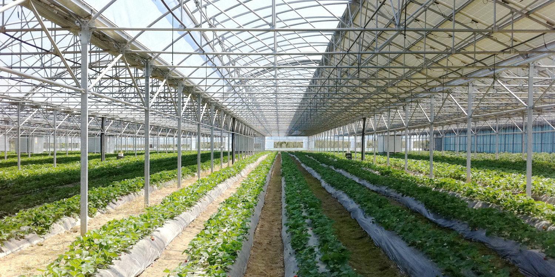 Montaje de invernaderos y centros de jardinería