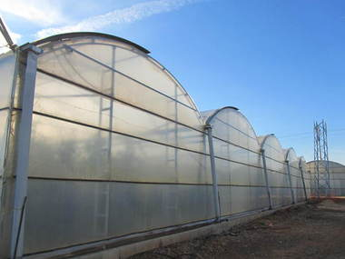 Reparación y montaje de plástico en invernadero de 3000 m2 en Toledo
