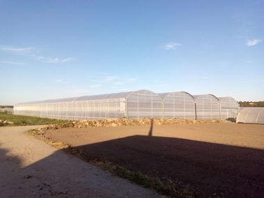 Montaje y venta de invernadero de 3.240 m2 en Madrid para producción de tomate, pepino y acelga.