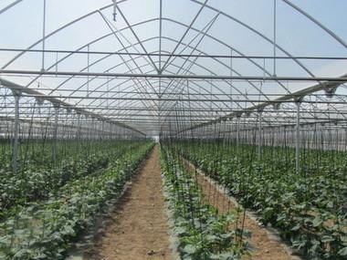 Montaje de invernadero y riego de 15.000 m2 para pepino y tomate en Madrid