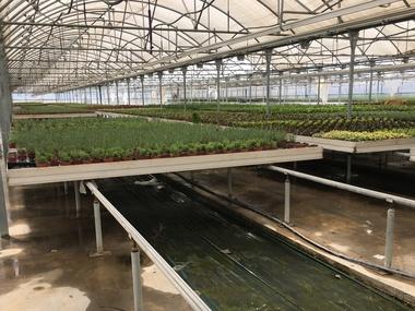 Proyecto plan director de eficiencia energética en 22 invernaderos con calefacción de vivero ornamental en Madrid